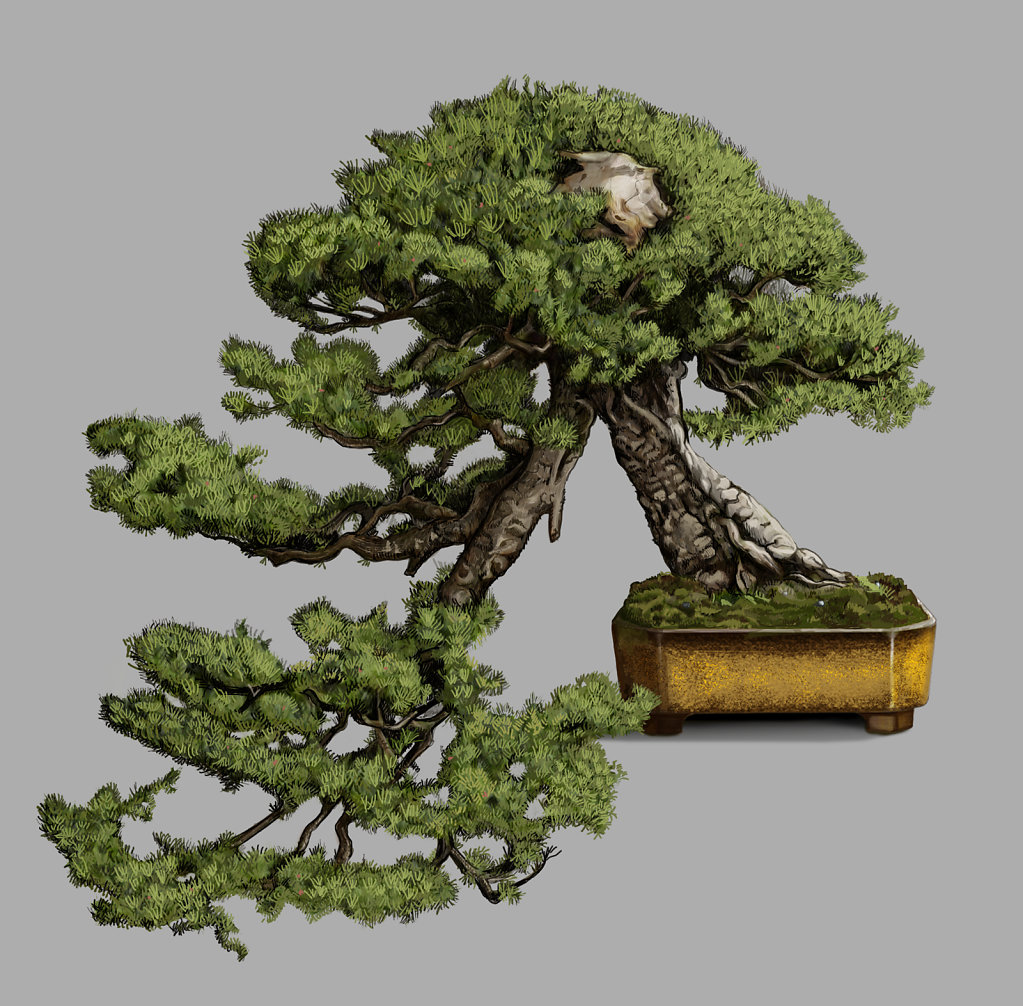 Bonsai illustration step 02